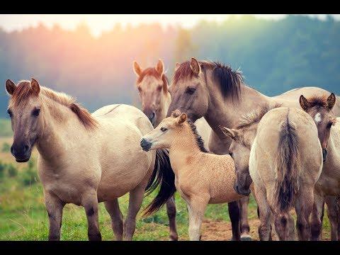 على غرار الكلاب المرشدة..حصان يساعد المكفوفين في بريطانيا  - نشر قبل 15 ساعة