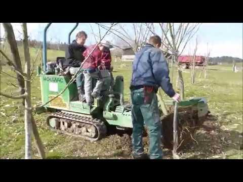 Bäume Umpflanzen kastanienplantage gwand bäume verpflanzen