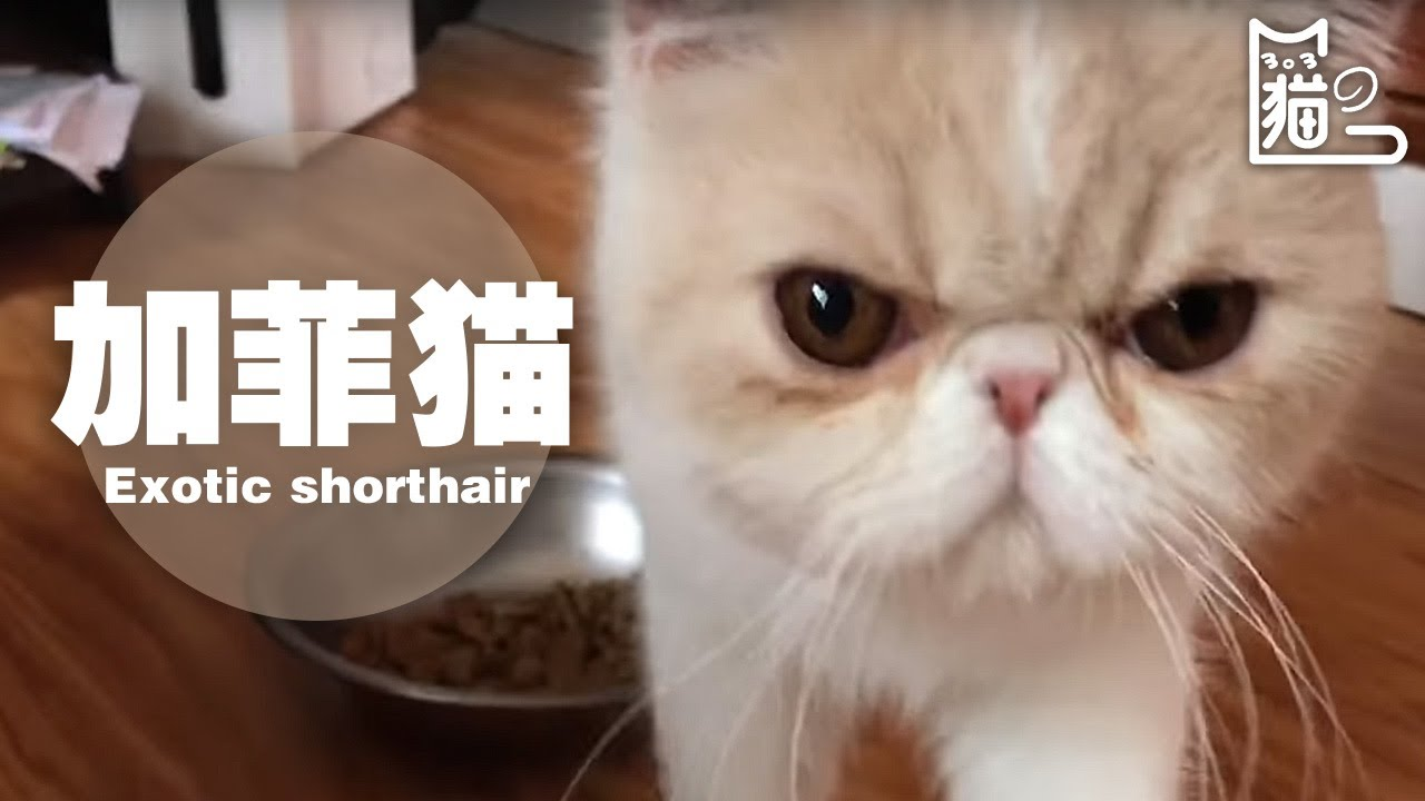Cats Dogs Youtube Funny