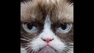5 choses que vous ignoriez sur Grumpy Cat