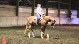 Paint Horse for sale BDB Silent Essence AKA Betsy