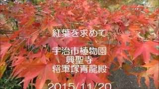 20151120紅葉宇治青龍殿