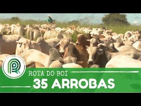 Boi: veja o segredo de fazenda para atingir 35 arrobas por hectare