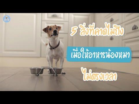 5 สิ่งที่คาดไม่ถึง เมื่อให้อาหารน้องหมาไม่ตรงเวลา    SudPad-Dog