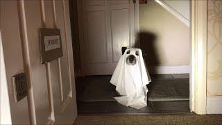 A Border Terrier Dogmas Carol #BTXmas 2020