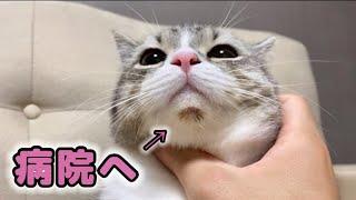 【緊急】猫のあごに脱毛と出血があったので病院に行きます。