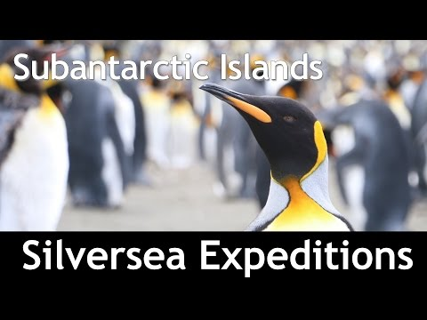 Sub-Antarctic Islands on Silversea 2015