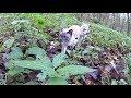 Anleitung: Wie man eine Katze trainiert mit Leine Gassi zu gehen Teil 1 (+ meine 2 Siamkatzen)