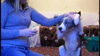 How To Train Say Your Prayers - Dog Training