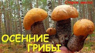 Осенние грибы.Поход в лес