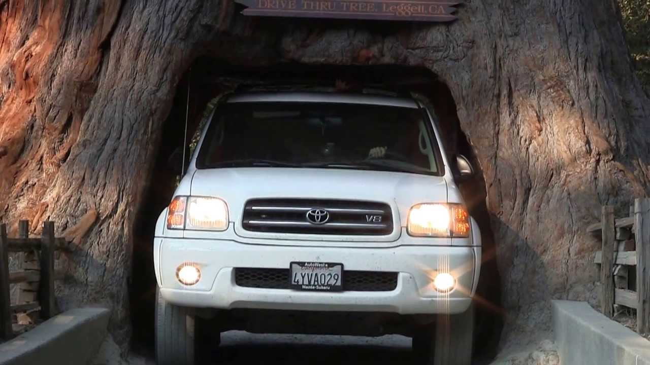 Driving through the chandelier tree in a 2003 toyota sequoia limited driving through the chandelier tree in a 2003 toyota sequoia limited edition leggett ca youtube arubaitofo Choice Image