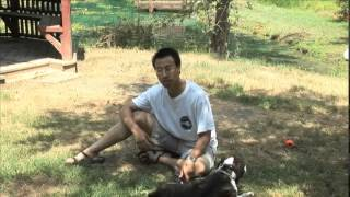 Maryland Dog Training  Testimonial  Puma
