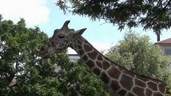 Zoo Karlsruhe - Großer Rundgang mit allen Tieren und Attraktionen