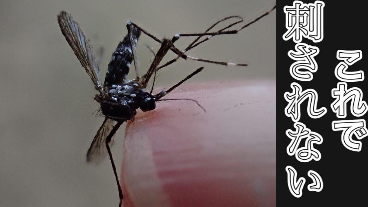 この時期必見!植木屋が教える蚊の知識と対策(字幕対応)