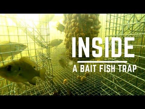 Inside A Bait Fish Trap - Underwater CAM Bait Fish Trap -  (Bream / Perch / Sunfish /Pinfish)