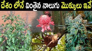 Four Unique Plants Grows In India | 4 Holy Plants That Usually Worship By Indians | Tollywood Nagar