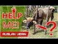 Освобождение Бурёнки из колючей изгороди в Гондурасе 5 выводов Ruslan Verin 14 mp3