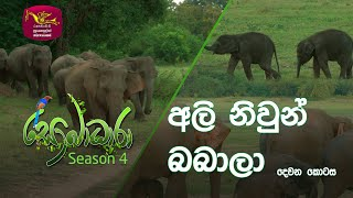 Sobadhara - Sri Lanka Wildlife Documentary | 2020-09-04 | Twin Elephants - 2 (අලි නිවුන් බබාලා...) Thumbnail