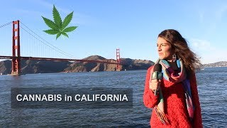 Avance CANNABIS en CALIFORNIA: Marihuana recreactiva LEGAL en USA