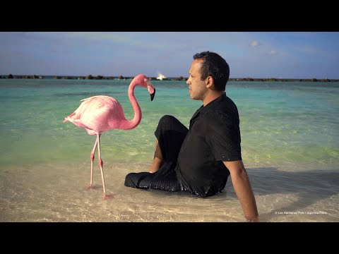 The Mystery of the Pink Flamingo Tráiler