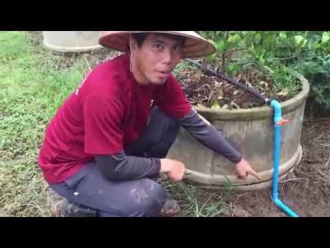 ระบบน้ำมินิสปริงเกอร์ - สวนมะนาว เอนไซน์ เชียงใหม่(En-Sci farm) Part 1