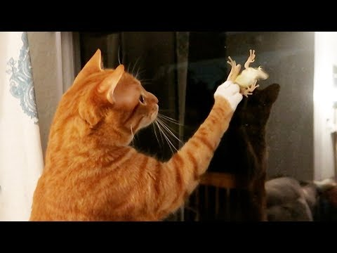 When Cats See Frogs…