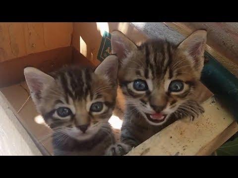 とてもかわいくニャーニャー鳴いている子猫