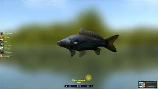 трофейна рибалка 2, Короп чорний, проходження квесту в грі Трофейна рибалка 2