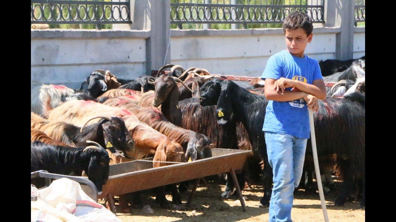 Adıyaman'da Hayvan Pazarında Yoğunluk Devam Ediyor