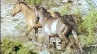North America's Wild Horses and Wildlife