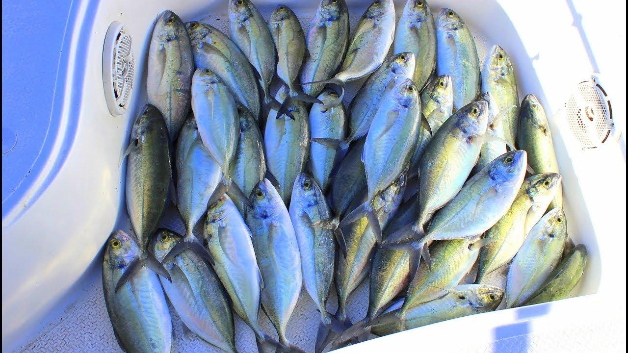 Balıklar Adeta Yağmur Oldu Teknemize Yağdı / İnanılmaz Bereket !!