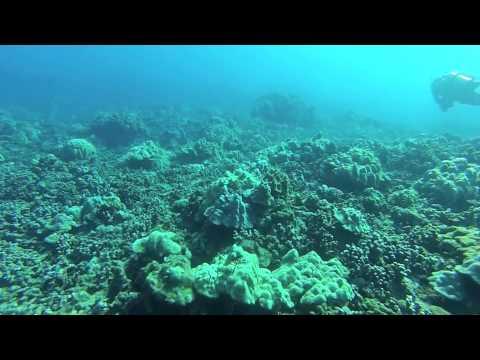 Leleiwi Dive in Hilo, HI