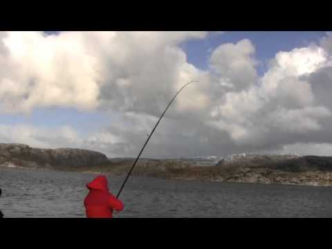 Gary Pye On Norway Trip Shore Fishing For Cod And Haddock