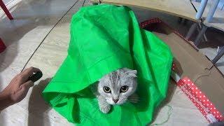 Кошка испугалась огурца. Реакция на другие овощи