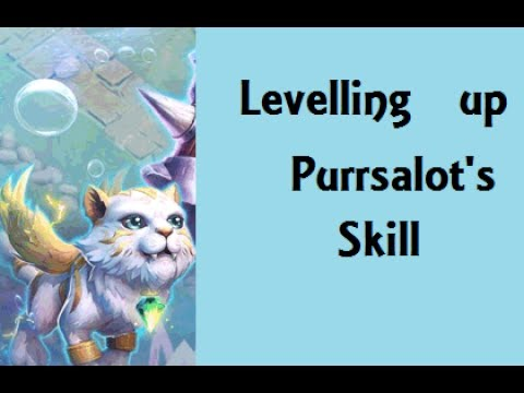 Levelling Up Purrsalot Pet Skill Furrocity  Castle Clash