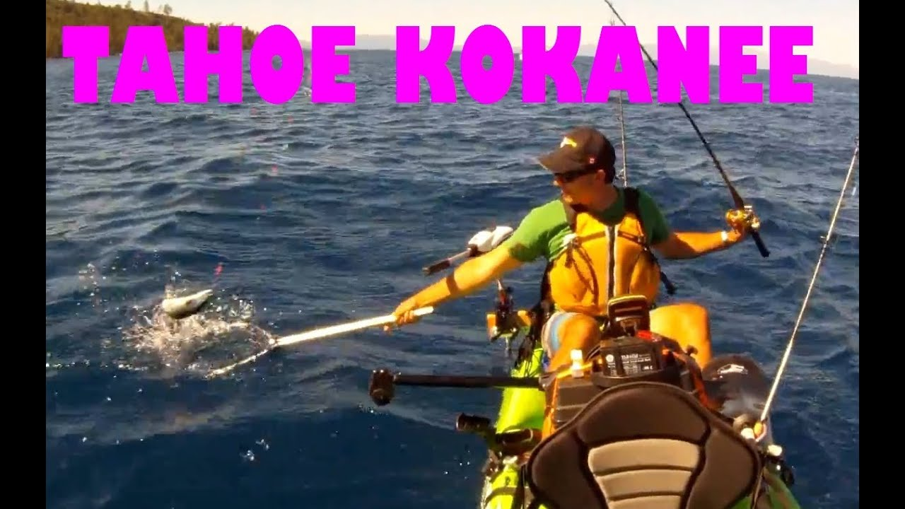 how to fish for kokanee from the shore