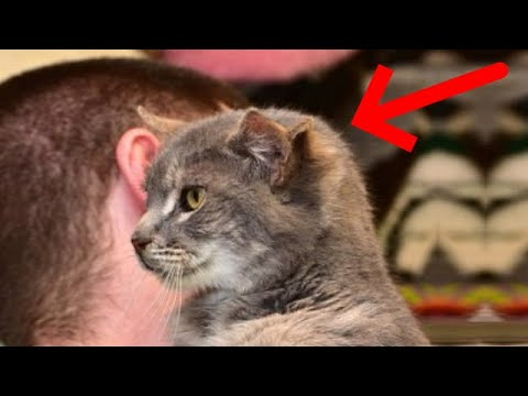 Кот тремя ушами был за 25 января