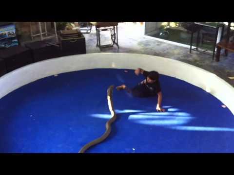 Kæmpe slange