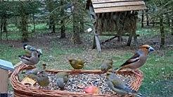 Záchranná stanice živočichů Makov - Krmítko (Bird feeder)
