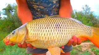 ДИКИЕ САЗАНЫ ДИКОЙ РЕКИ ТАКИЕ ПОКЛЕВКИ НАДО ВИДЕТЬ Рыбалка на четыре дня