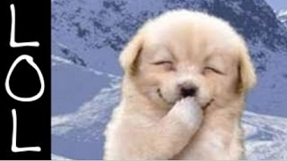 Funny Dogs   World's Funniest Dog Video Ever!