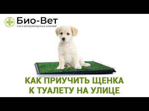 Вопрос: Какие болезни могут быть у трехмесячного щенка?