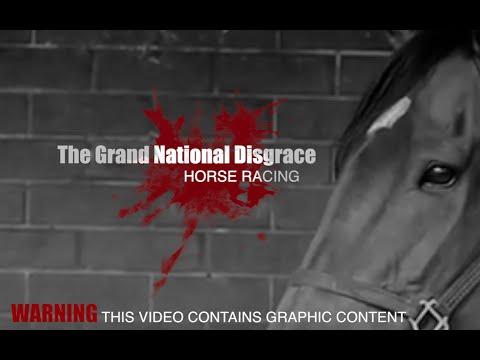 Grand National Disgrace | Horse Racing