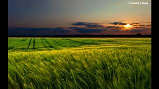 [ASMR] 조용한 시골 평화로운 풀벌레 귀뚜라미 저녁바람소리 Peaceful Nature Ambiance -Cricket, Relaxing Natural Sound
