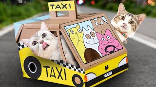 DIY Cat Carrier - Cardboard Carry Cage Taxi!| Easy Craft Projects & Art Ideas