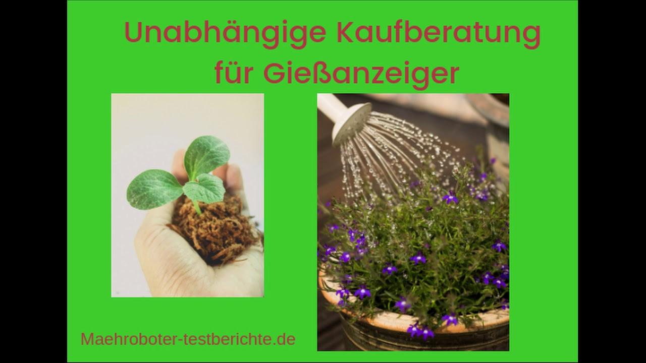 6 x WESTLAND® Gießanzeiger für Blumenerde Sparset 26 cm weiß
