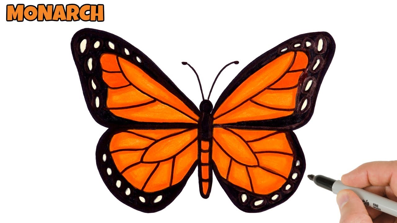 How to Draw Butterfly Easy | Monarch butterfly drawing and ...
