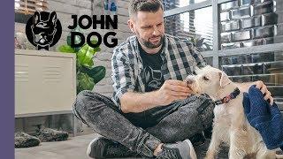 Jak przyzwyczaić psa do kąpieli? – TRENING – John Dog