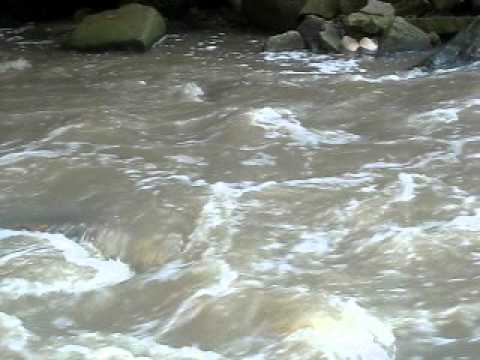 Coho salmon run in 20 mile creek youtube