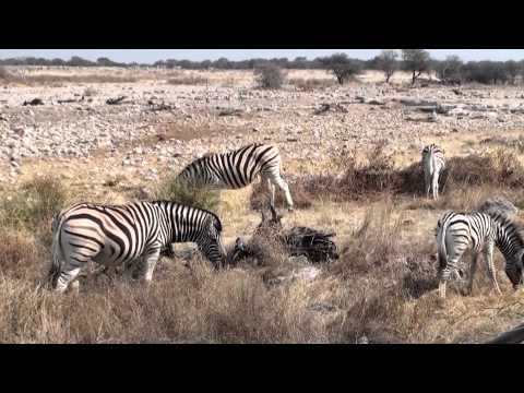 Namibie Safari 2
